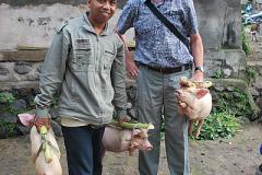 Goed geslaagd op de pasar babi (2009)