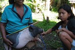 De moeder van Gedeh blij met haar varkens