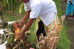 Varkens als belangrijk onderdeel van de tempelceremonies…